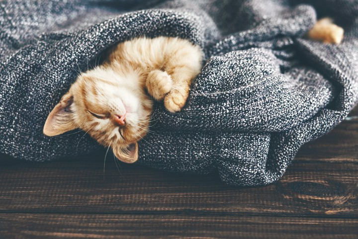 Hund, Katze, Kaninchen: Kann man Ausgaben für Haustiere von der Steuer absetzen?